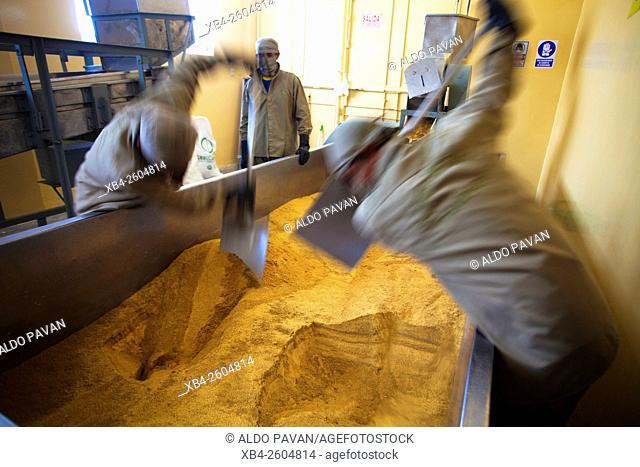 Peru, Piura, Norandino, sugar cane prodution