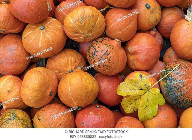 different kinds of pumpkins, autumn market, Austria