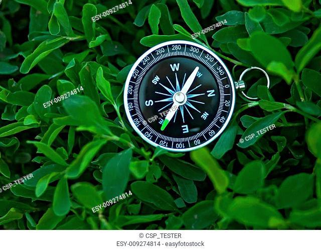 compass on green grass