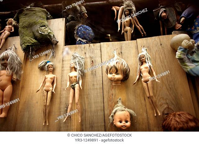 Dolls hang on a tree on the Island of the Dolls in Xochimilco, southern Mexico City. The late Don Julian turned his 'chinampa