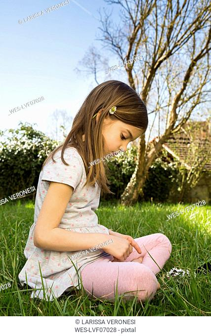 Little girl sitting on a meadow picking daisies