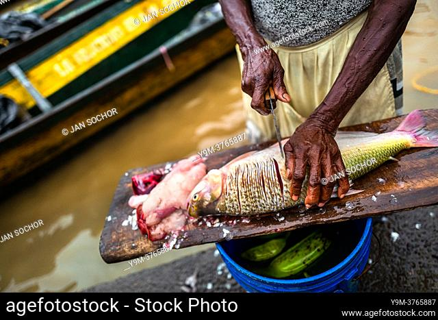 An Afro-Colombian vendor prepares a fish for sale in the Atrato river market in Quibdó, Chocó, the Pacific region of Colombia