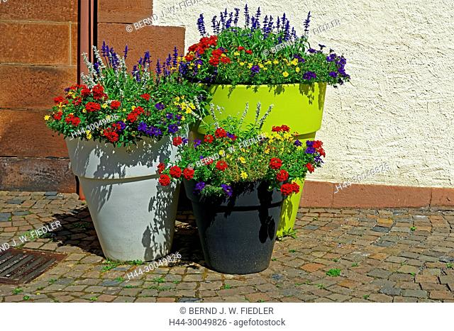 Flowers, blossoms, flowerpots, decoration, detail, Annweiler in the Trifels Germany