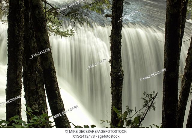 Lower Lewis River Falls spans the river at a wide spot, creating blocks and whirlpools