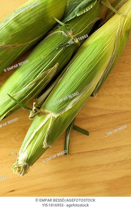Corn cobs. Valencia. Spain