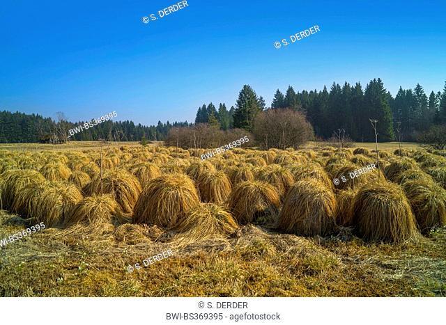grass-covered peat hills, former peat-cutting field, Kirmesau Breiter Filz, Germany, Bavaria, Oberbayern, Upper Bavaria