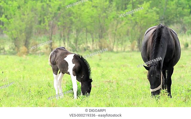 Horse family in the pasture