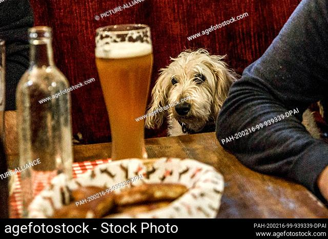 """16 February 2020, Berlin: A dachshund sits between two visitors in the guest room of the """"""""Posh Teckel Bar"""""""" during the big dachshund weekend"""
