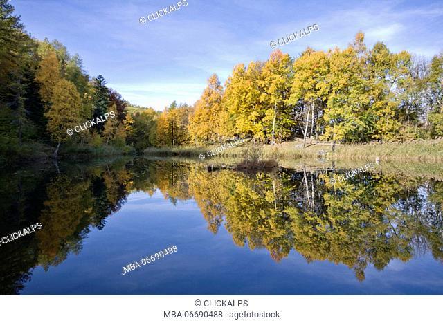 Orsiera Rocciavre Park, Susa Valley, Piedmont, Italy. Lake frogs
