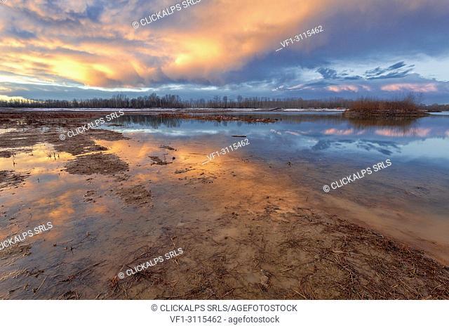 Po river park, Alessandria province, Piedmont, Italy, Europe