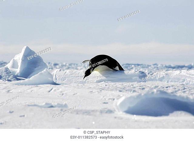 Penguin hurdles