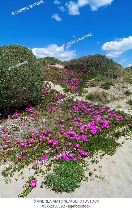 Sand dunes by the beach. Rome littoral. Italy