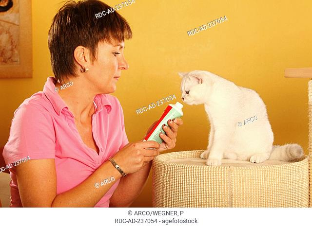 Woman and British Shorthair Cat / giving vitamine paste, tube