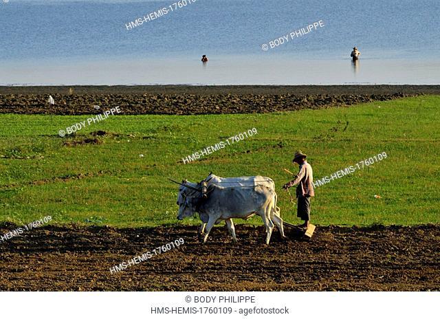 Myanmar (Burma), Mandalay Division, Amarapura, Taungthaman Lake, U Bein, farmer ploughing his field