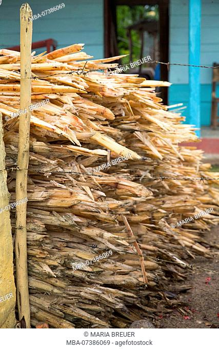 Sugar Cane, Hacienda Iznaga, Mansion of the Iznaga Family, Sugar Plantation, Los Ingenios Valley, Trinidad, Sancti Spiritus Province, Cuba, Cuba Republic