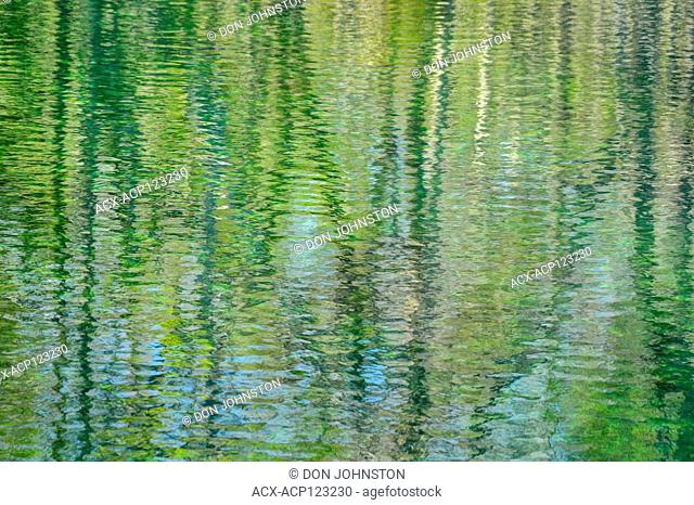 Reflections in Wakulla Springs, Wakulla Springs State Park, Florida, USA