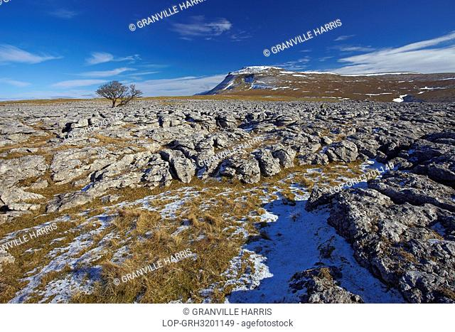 England, North Yorkshire, Ingleton. View over the White Scar limestone pavement towards Ingleborough, the second highest mountain in the Yorkshire Dales and one...