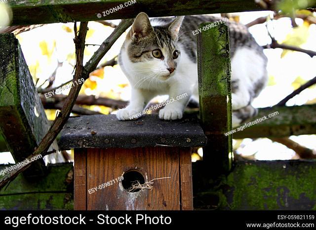 Katze auf einem Nistkasten