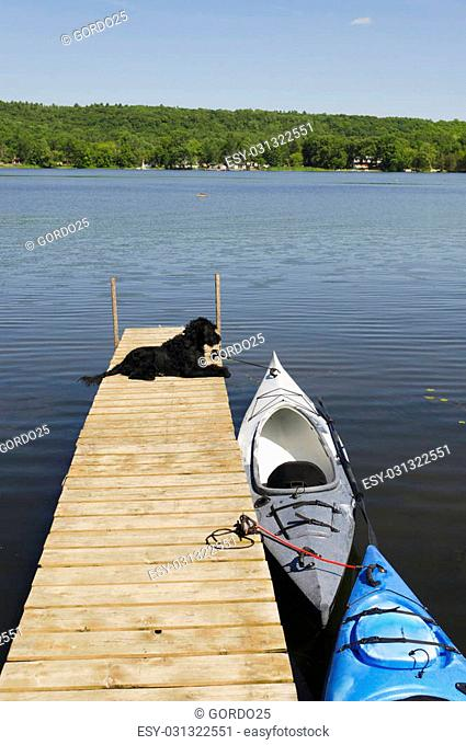 Labradoodle pup waiting for her ride in the kayak