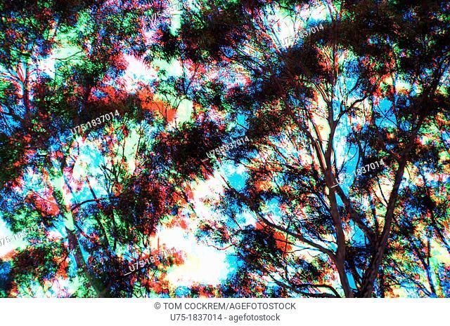 tri-color tree and foliage