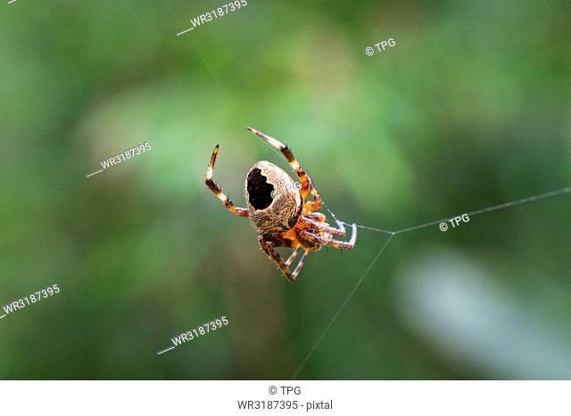close up; Spider