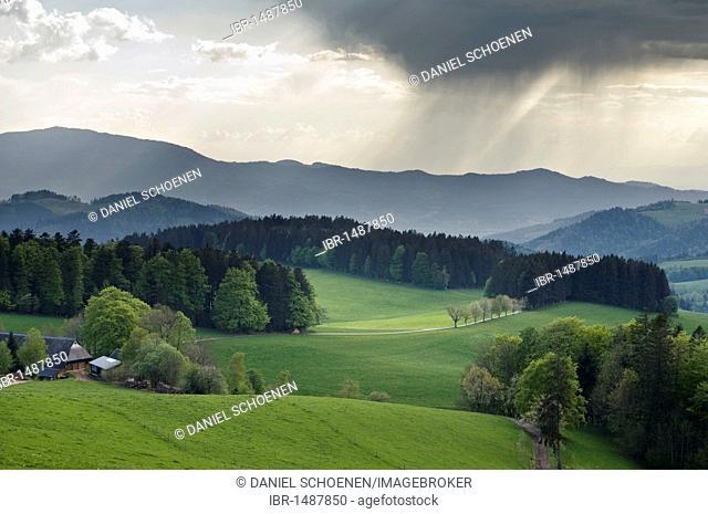 Southern Black Forest, near St Maergen, Baden-Wuerttemberg, Germany, Europe