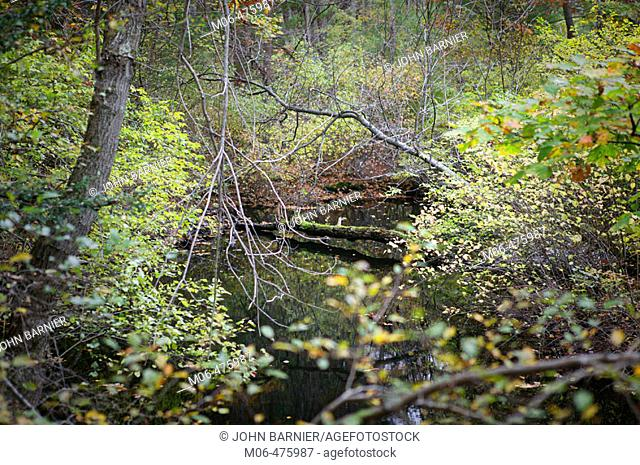 A view of a creek in Cat Rock Park, in Weston Massachusetts