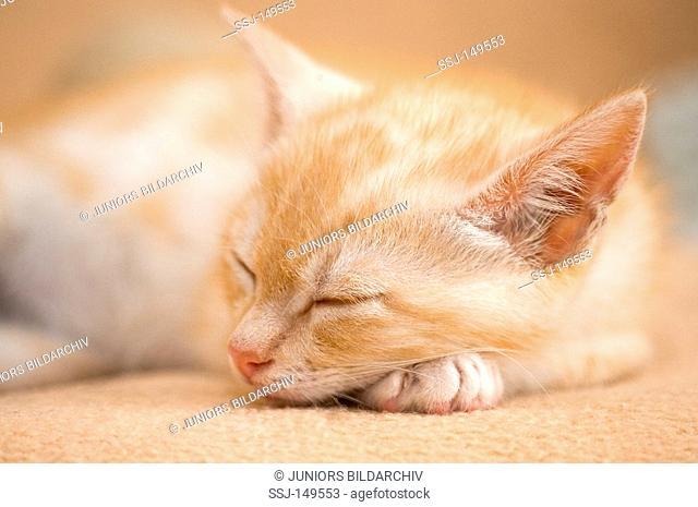 cat - kitten seven weeks sleeping restrictions: Tierratgebebücher, Kalender / animal guidebooks, calendars