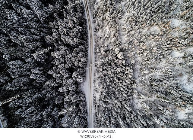 Road passing through snow covered forest