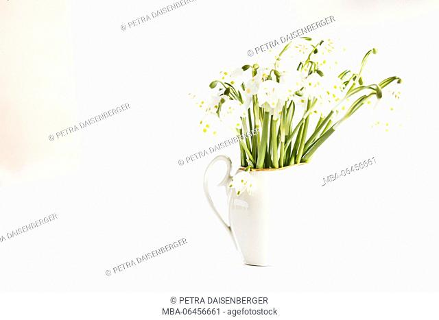 Bouquet with spring snowflakes in a cup, Leucojum vernum