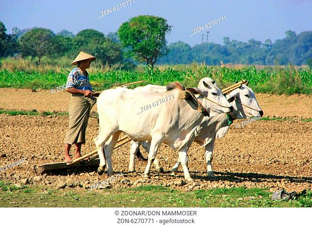 Local man working on a farm field, Amarapura, Mand