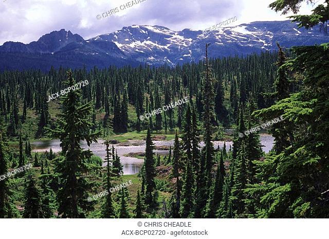 Strathcona Provincial Park, Forbidden Plateau, Vancouver Island, British Columbia, Canada