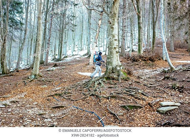 hiker walks in snow-covered mountain, prealps, Lombardia, Italy
