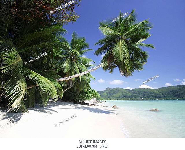 Palm trees over beach, Anse A La Mouche, Mahe', Seychelles