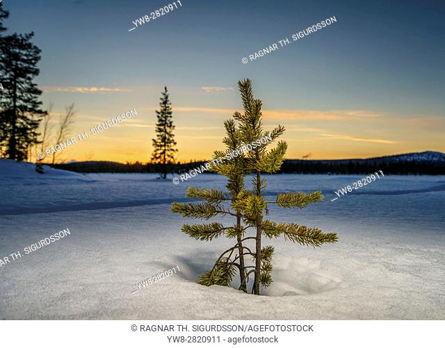 Winter landcape, Jukkasjarvi, Lapland, Sweden
