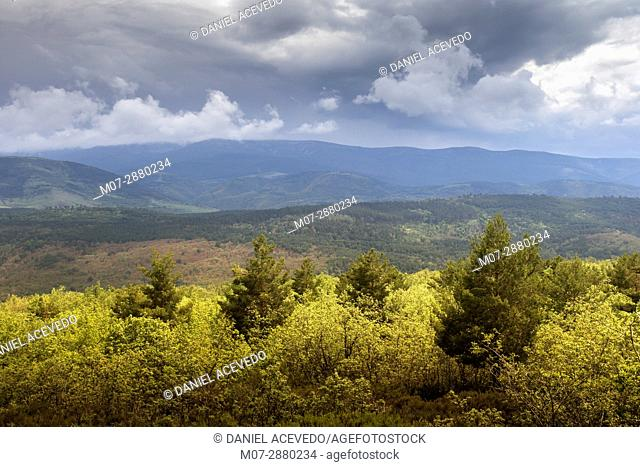 Canales de la Sierra oak and pine forest, Najerilla valley, La Rioja, Spain