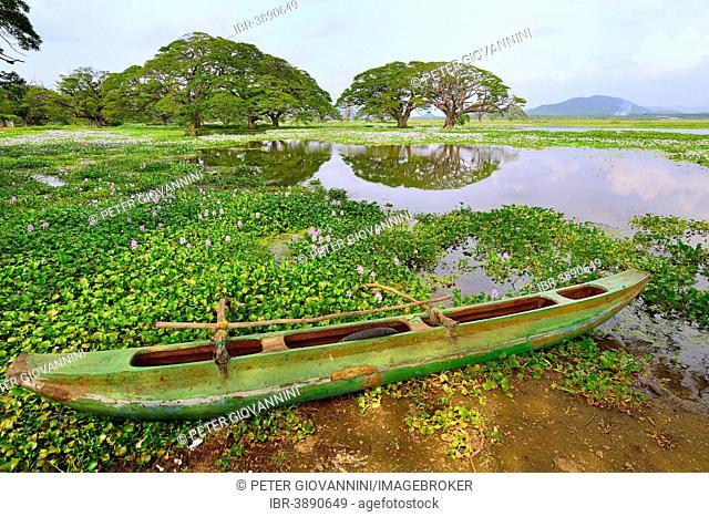 Outrigger canoe on the banks of the artificial lake Tissa Wewa, Tissamaharama, Southern Province, Sri Lanka
