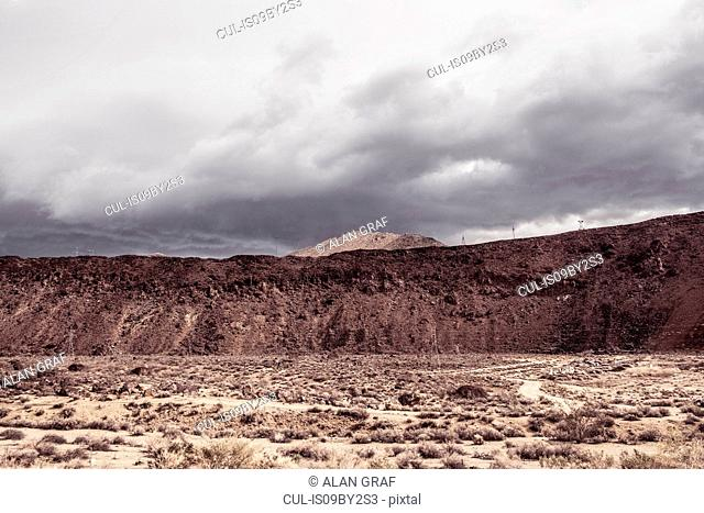 Arid landscape, Joshua Tree, California, USA