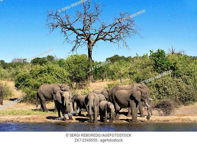 From Victoria Falls is possible to visit the nearby Botswana. Specifically Chobe National Park. Chobe - The Elephant Capital of Africa