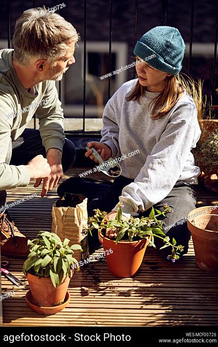 Father and daughter planting flower together on balcony