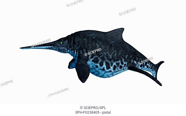 Illustration of a Shonisaurus