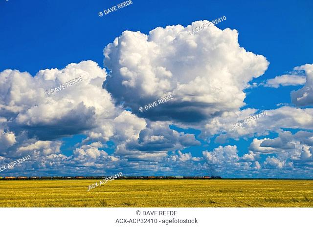 a train carrying rail hopper cars passes an oat stubble field and a sky filled with cumulus clouds developing into cumulonimbus form , near Carey, Manitoba