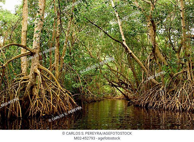 Swamps, Centla. Tabasco, Mexico
