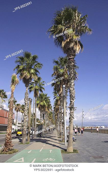 Palm trees along Passeig Maritim by Barcelona beach. Spain