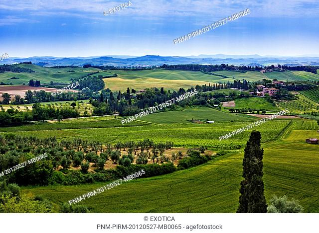 Trees in a field, Delle Quattro Torra, Siena, Tuscany, Italy