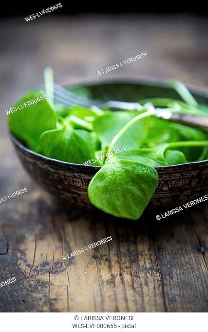 Bowl of winter purslane (Claytonia perfoliata) on wooden table