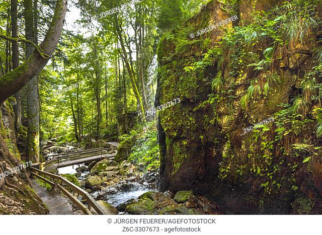 sprinkling waterfall on a gorge, village Menzenschwand, High Black Forest, Germany, cascade in a ravine