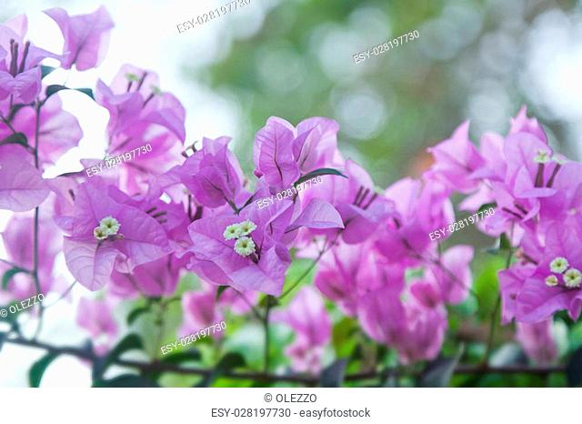 pink tropical flower in soft focus, spring background
