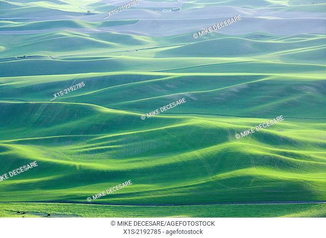 Steptoe Butte landscapes