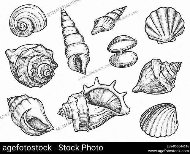 Set of isolated seashell sketches or silhouette of conch, ocean shell or mollusk scallop, sea or underwater animal fossil. Cockleshell or cockleboat